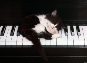 1495-cute-kitten-sleeping-on-piano-keys-wallpaper-wallchan-1440x1050
