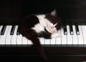 1495-cute-kitten-sleeping-on-piano-keys-wallpaper-wallchan-1440x1050